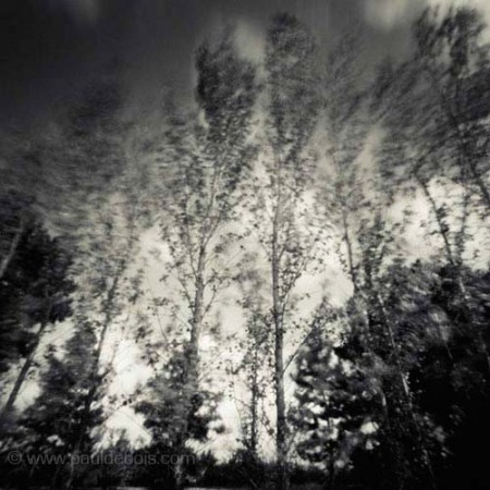 Pinhole Impressions 1, Poplar at RHS Wisley