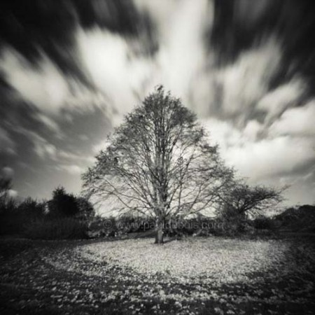 Pinhole Impressions 3 Lime tree or Tilia Tomentosa at RHS Wisley