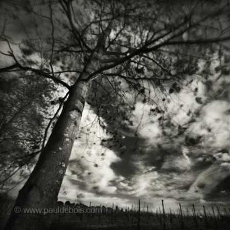 Pinhole Impressions 5, Poplar at RHS Wisley