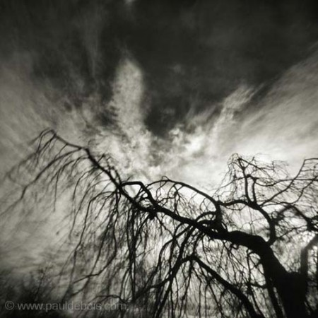Pinhole Impressions 6 - Fagus Sylvatica Pendula or Weeping Beech at RHS Wisley