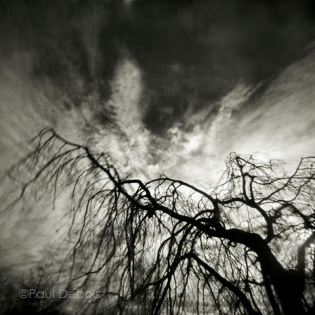 Pinhole Impressions 6 - Fagus Sylvatica Pendula