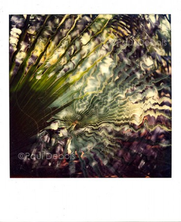 Polaroid SX-70 - Palm leaf at Kew from 1982. My first print sale. The original was copied onto colour negative film and then printed on agfa paper, producing an image approximately 15 inches square.