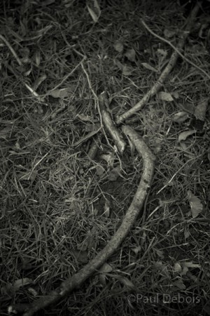 twigs and branches, Kew Gardens