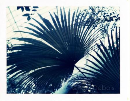 Palm House Kew Gardens - 669 Polaroid print