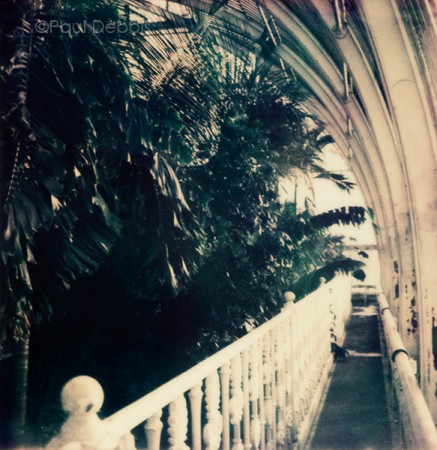 'Palm House 1' Kew Gardens - SX-70 print