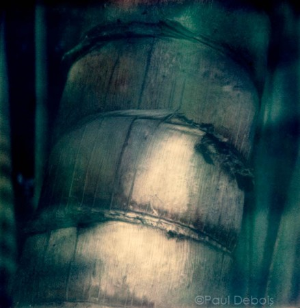 'Palm House 3' Kew Gardens - SX-70 print