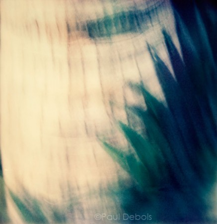 'Palm House 4' Kew Gardens - SX-70 print