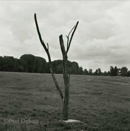 The Danger Tree, at Beaumont-Hamel Canadian memorial