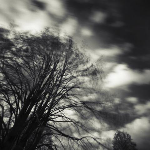 Pinhole Impressions 2 - Lime tree or Tilia Tomentosa©Paul Debois