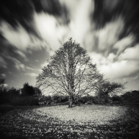 Pinhole Impressions 3 - Lime tree or Tilia Tomentosa©Paul Debois