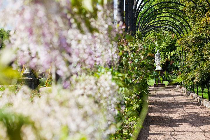Trentham Gardens, Wisteria Walk