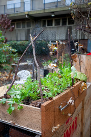 Urban Forest allotments
