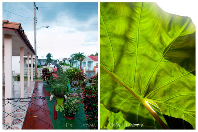 Left: Pet, Viales. Right: Botanical garden, Cienfuegos