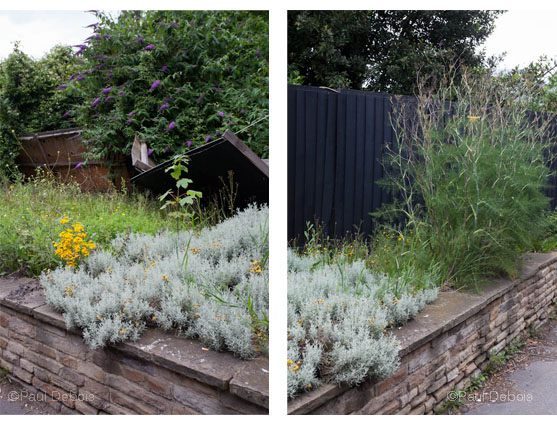 Derelict flower bed, near West Lodge Gate, Gunnersbury Park