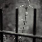 Gunnersbury Park, nettles