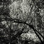 Trees, Gunnersbury Park