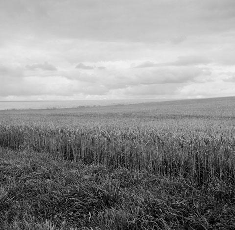Somme Valley, near Mouquet Farm memorial
