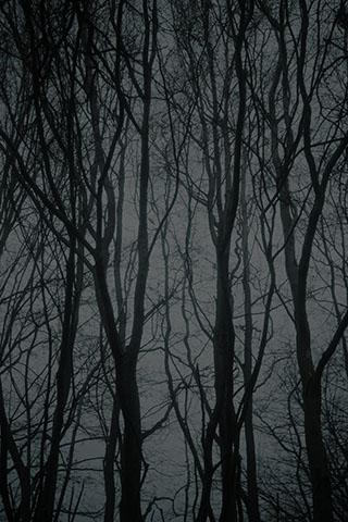 Beech trees, Gunnersbury Park