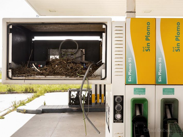 Bird's nest in derelict petrol pump
