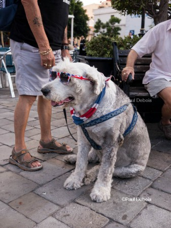 'Toby Cool' the dog in Gibraltar.
