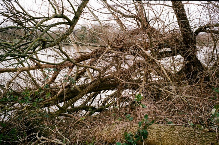 Fallen trees next to Chiswick Bridge