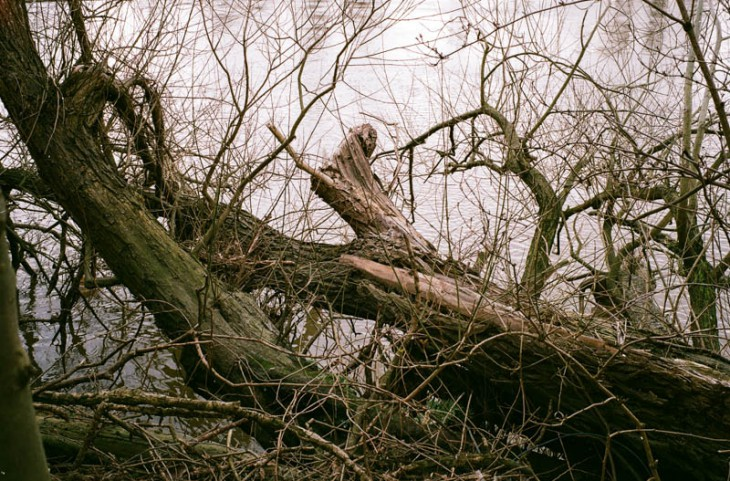 Fallen trees next to Chiswick Bridge
