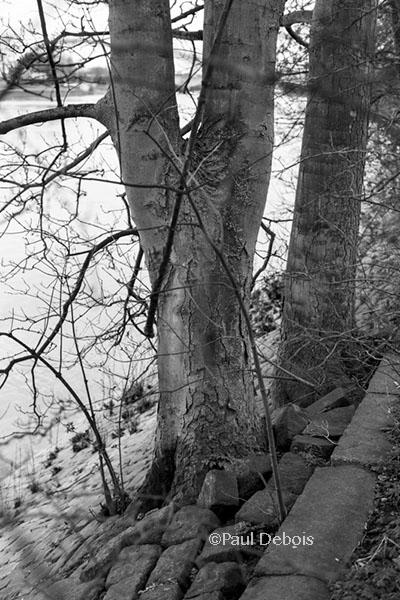 Thames footpath, Kew