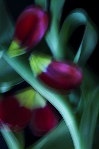 Floral series - 3