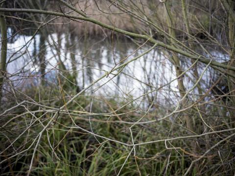Baron's Pond, Ealing