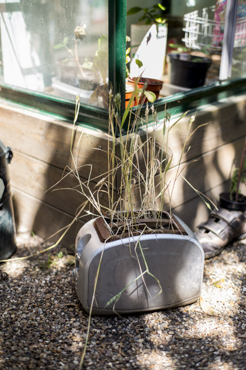 Chelsea Physic Garden, recycled toaster as planter