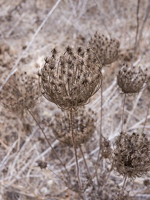 Dead flowers on wasteland
