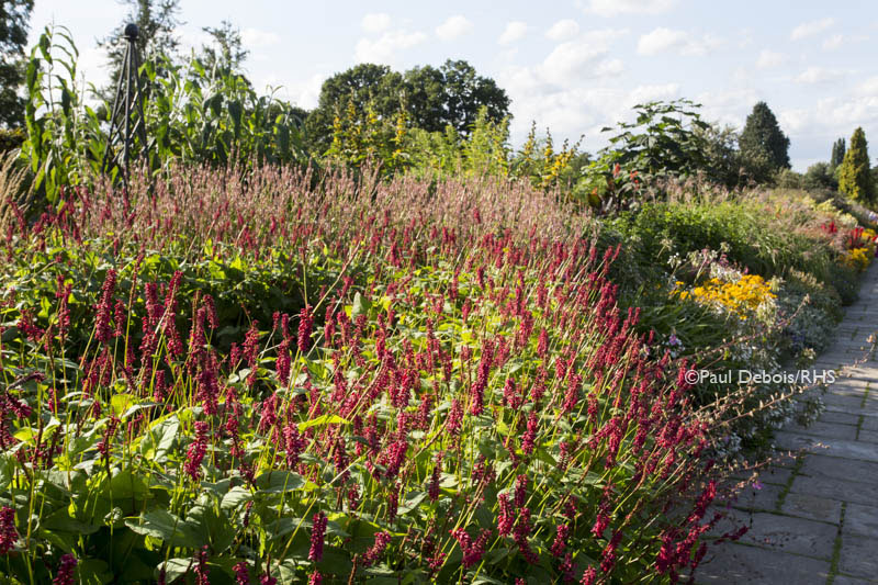 Herbaceous borders, Battlestone Hill